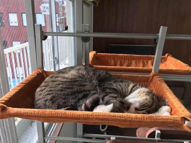 保護猫カフェ「ヘミングウェイ」でお昼寝する猫