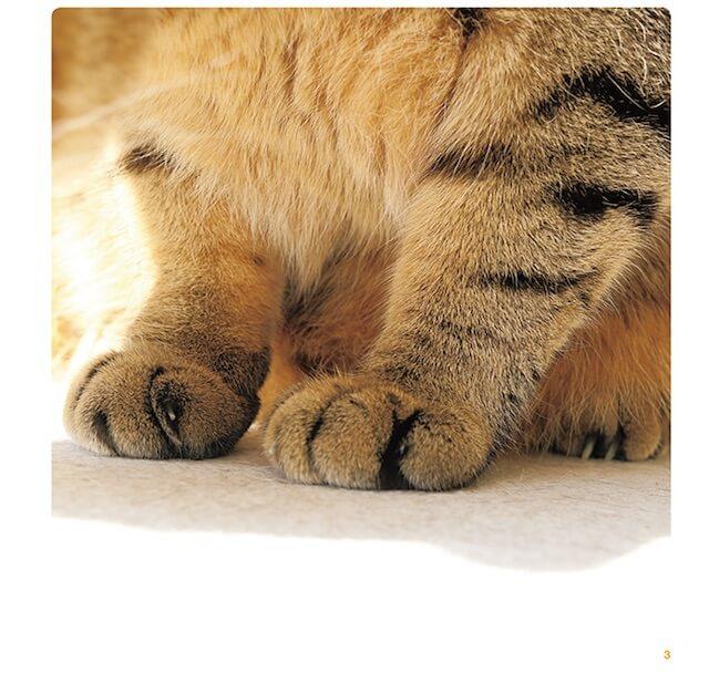 写真集「ねこのおてて」に収録されている猫の手2