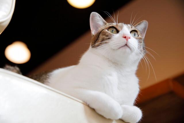 フォトブック「京のにゃんこ」の猫写真