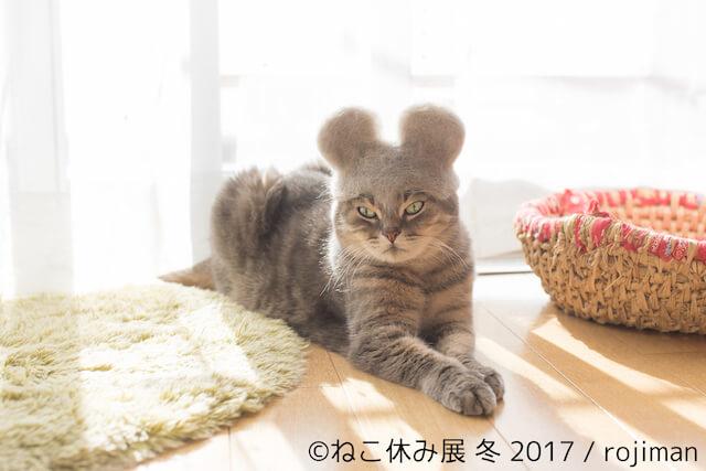 猫毛で作った帽子を被る猫