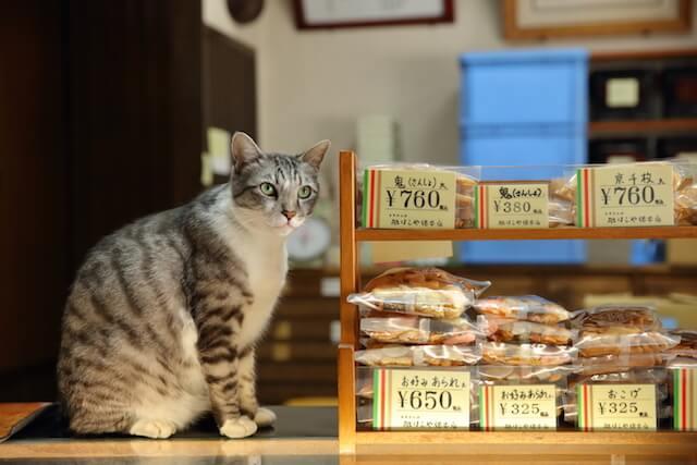 フォトブック「京のにゃんこ」に登場する、せんべい屋の猫