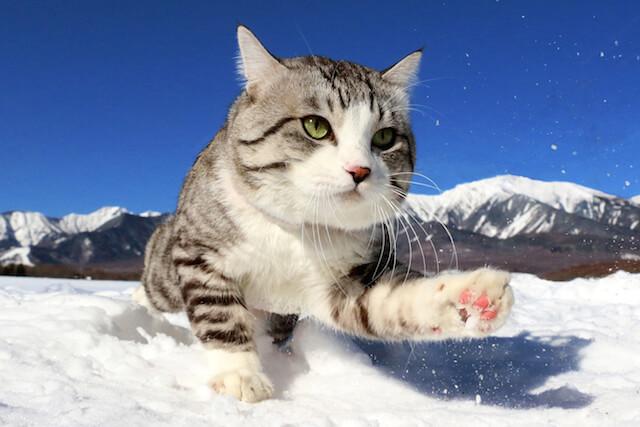雪の中を歩くニャン吉