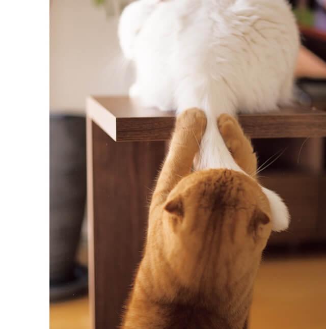 写真集「ねこのおてて」に収録されている猫の手4