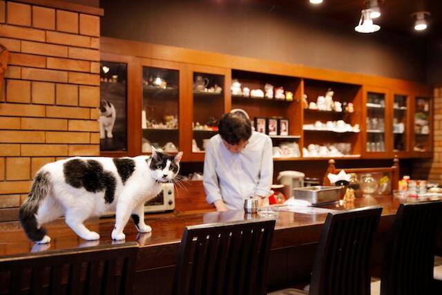 フォトブック「京のにゃんこ」に登場する、喫茶店の猫