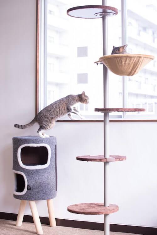 保護猫カフェ「ヘミングウェイ」のキャットステップ
