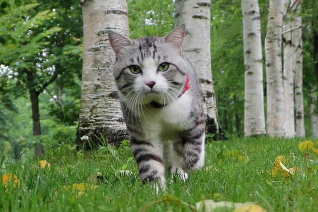 森の中を歩くニャン吉
