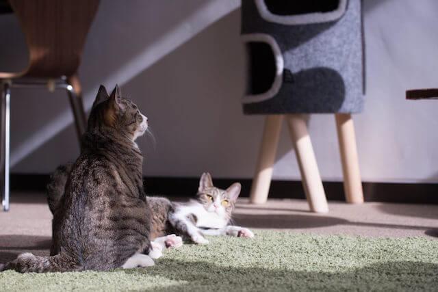 保護猫カフェ「ヘミングウェイ」にいる猫たち