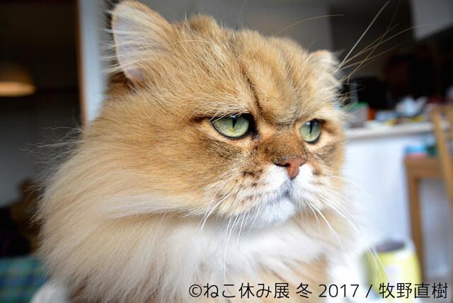 しょんぼり顔の猫ふーちゃんの新作写真