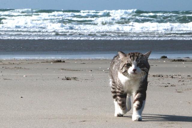 浜辺を歩くニャン吉