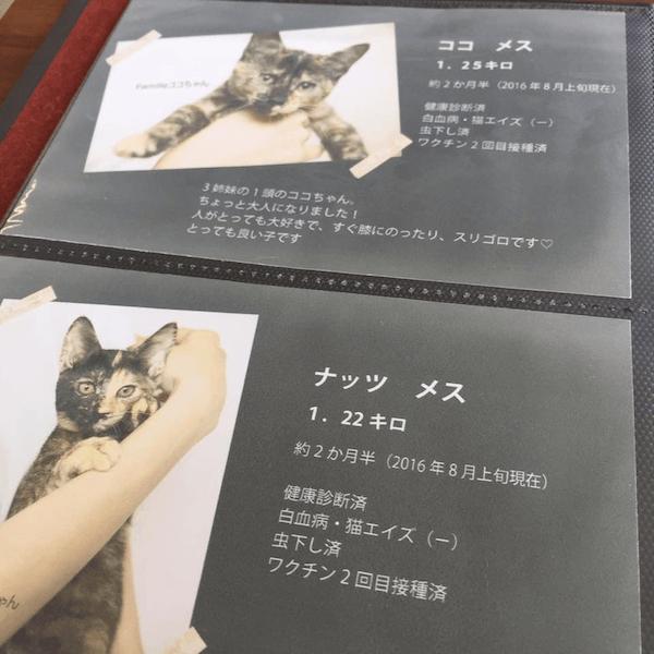 保護猫カフェ「ヘミングウェイ」猫の自己紹介