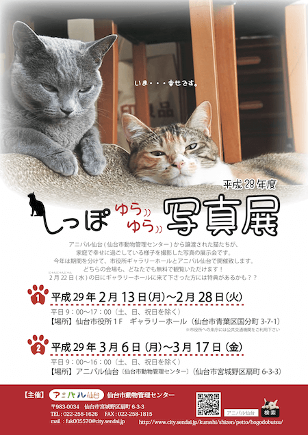 仙台市動物管理センター(アニパル仙台)で開催される譲渡猫の写真展「しっぽゆらゆら写真展」