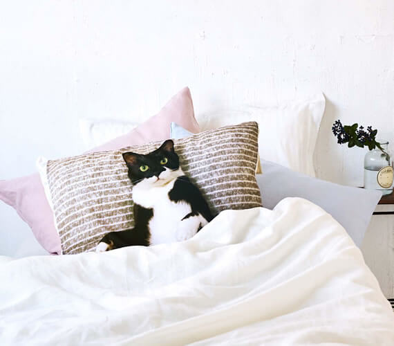 人気猫「ギズモさん」の枕カバーをセットしたイメージ
