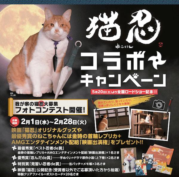 猫忍の映画公開記念、我が家の猫忍大募集フォトコンテスト