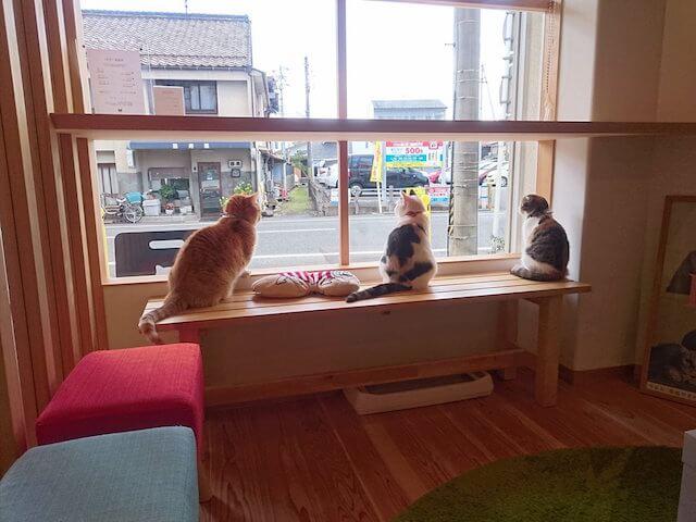 猫カフェ 「ごろーにゃ」の大きな窓は猫に大人気