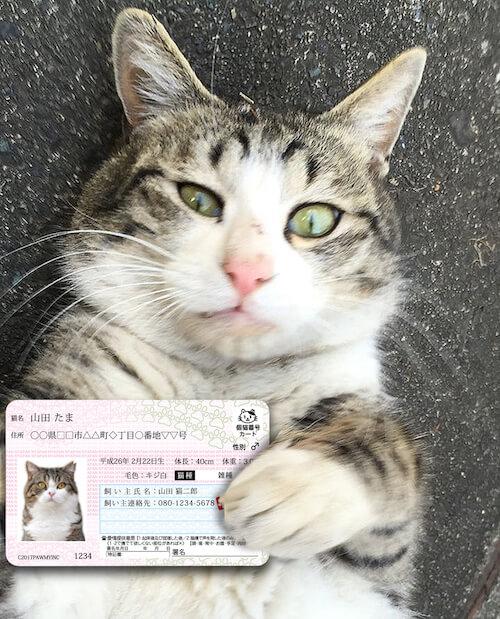 マイニャンバーカードを持った猫のイメージ写真