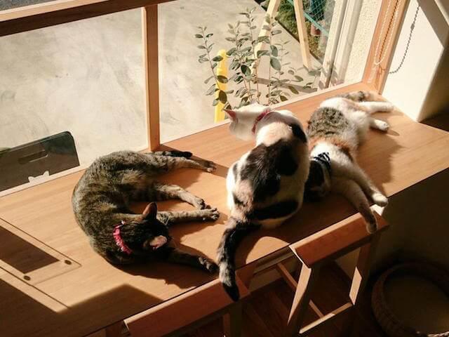 日向ぼっこする猫カフェ「ごろーにゃ」の猫たち