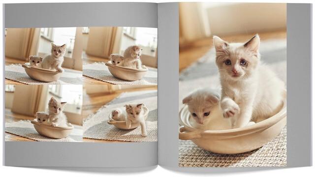 「PhotoJewel S(フォトジュエル・エス)」のペットモード機能で自動作成した猫のフォトブック