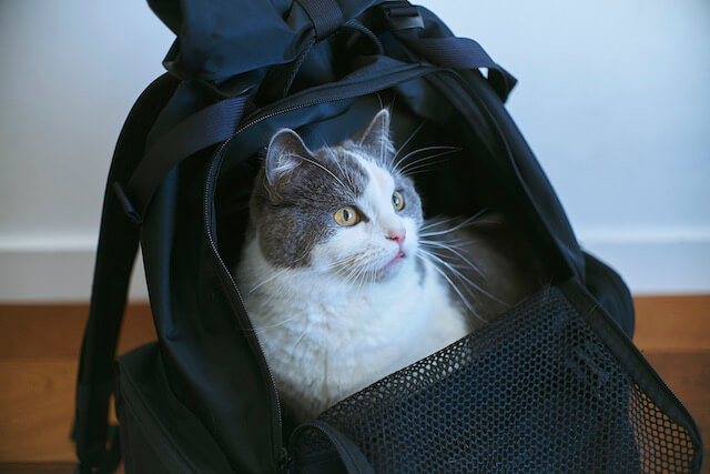 小谷実由とミツカルストアが開発した猫とお出かけできる「バックキャットパック」の写真4