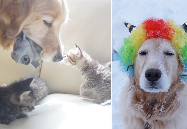 子猫を育てる犬の園長「わさびちゃんちのぽんちゃん保育園」
