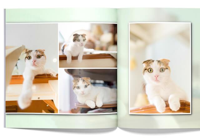 自動で愛猫の「いい写真」を選んでくれるフォトブックサービス「PhotoJewel S(フォトジュエル・エス)」