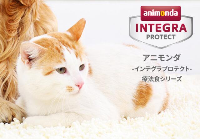 猫用の療法食インテグラプロテクトが刷新、複数の病気に対応