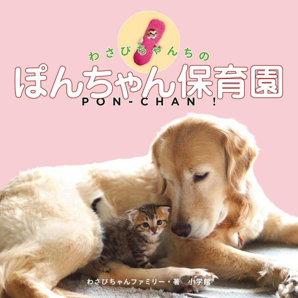 ゴールデンレトリバーのぽんちゃんが子猫の面倒をみる様子や日常を綴った書籍「わさびちゃんちのぽんちゃん保育園」表紙イメージ