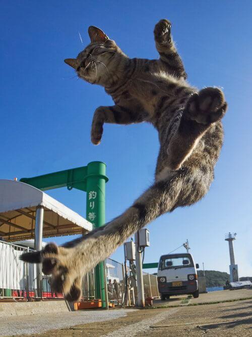 写真家アクセントの猫作品「のら猫拳」