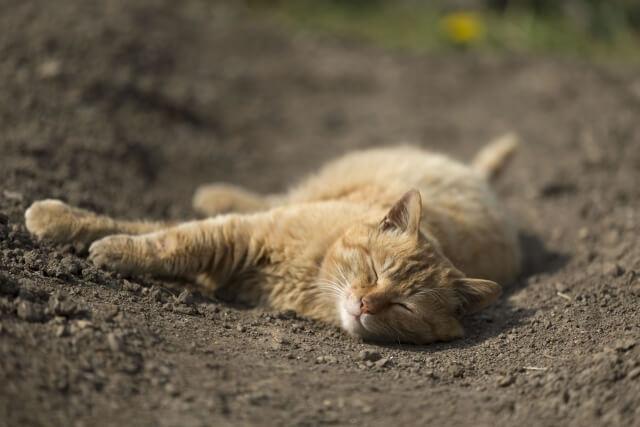 気持ちよさそうに寝ている猫