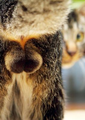 猫の部位別フェチ写真、にゃんたま