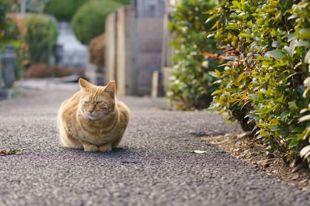 地域猫のイメージ写真