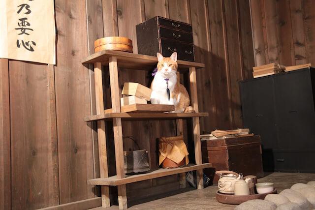猫忍の主役猫「金時」