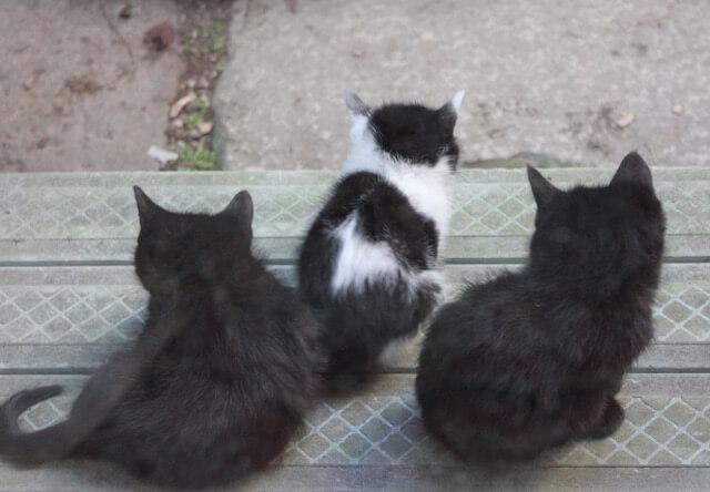 野良猫の子猫イメージ写真