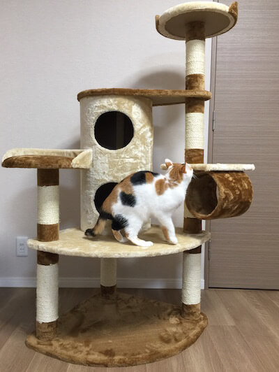 キャットタワーQQ80072の2階建てBOXから出る猫