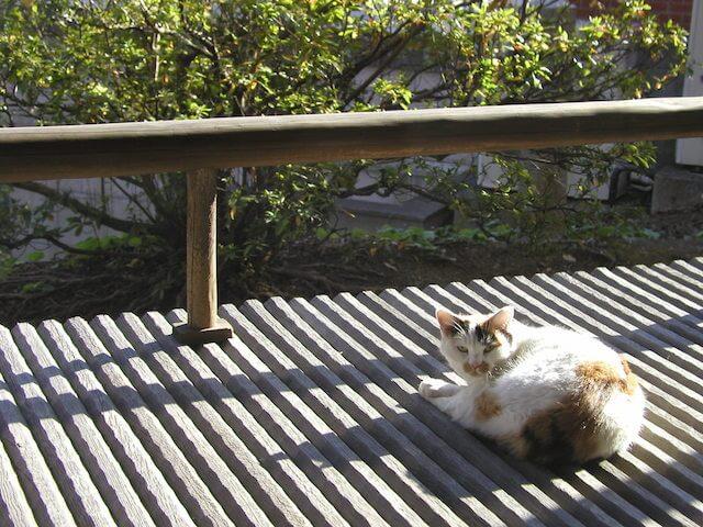 大佛次郎記念館の「ねこ写真展2017」で展示される猫の写真