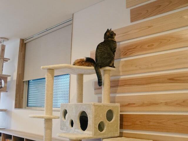 至近距離で壁を見つめる猫