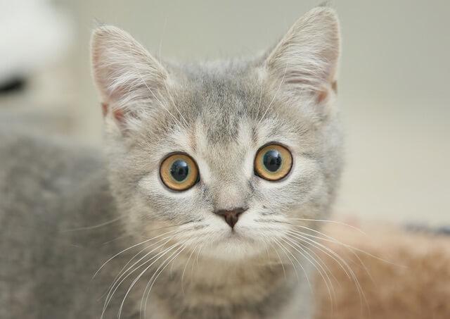 猫の好きなパーツ1位は「瞳」