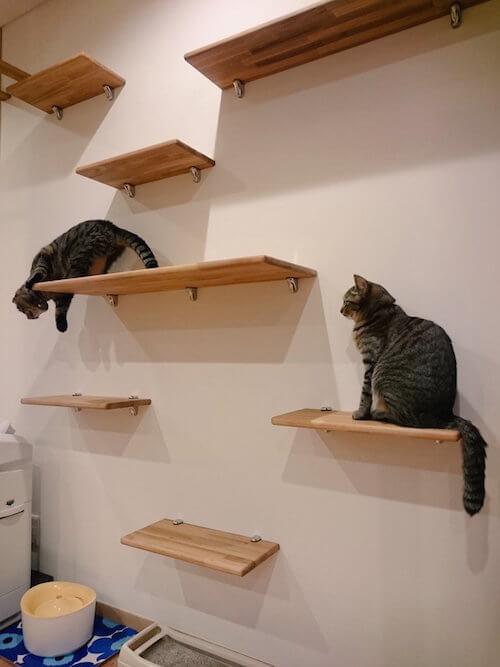 猫カフェ 「ごろーにゃ」のキャットステップ
