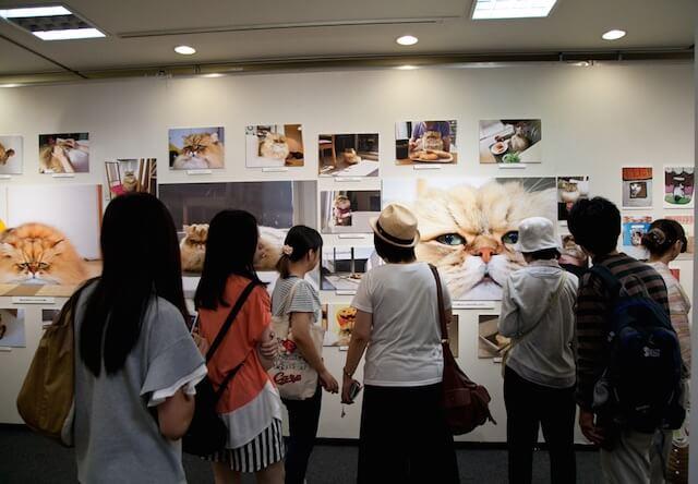「ねこ休み展」の展示風景