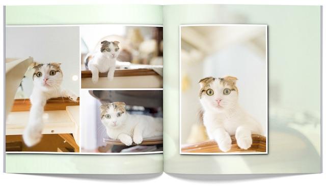 「PhotoJewel S(フォトジュエル・エス)」で作成した猫のフォトアルバム