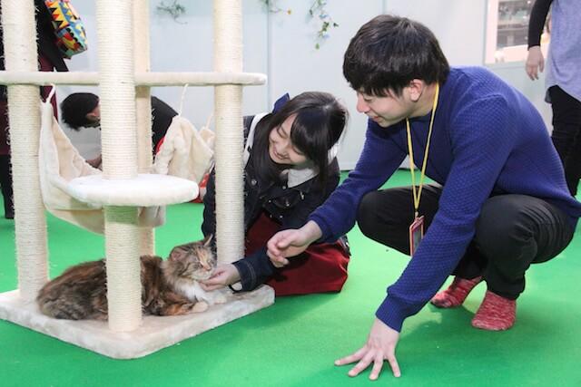 わんにゃんドームで猫と触れ合う様子