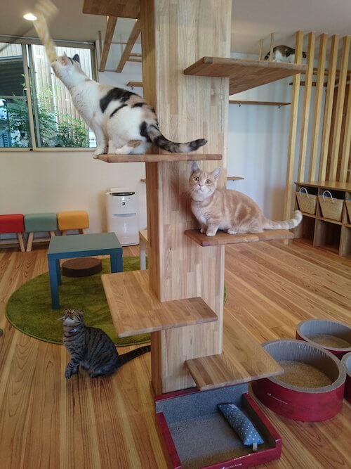 猫カフェ 「ごろーにゃ」にいる猫たち