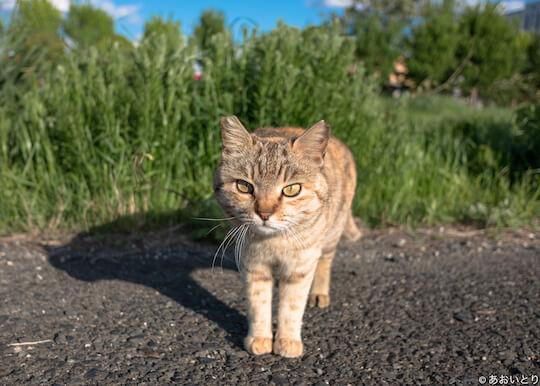 猫ノ図書館で展示される、あおいとりさんの猫写真1