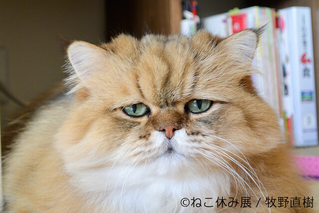 しょんぼり顔の猫ふーちゃん