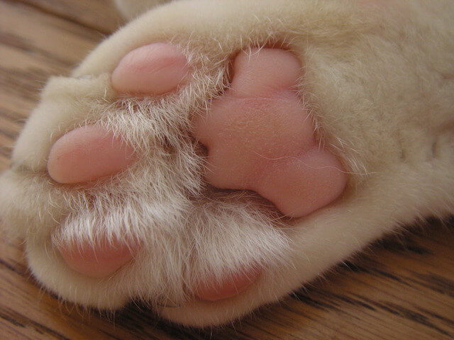 猫の肉球写真