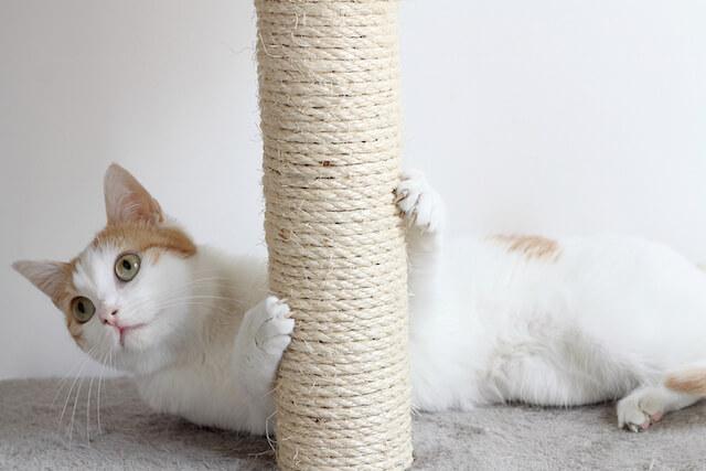 猫が爪とぎで爪を研いでいる写真