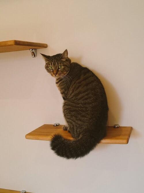 ミックスのオス猫 ぐりちゃん
