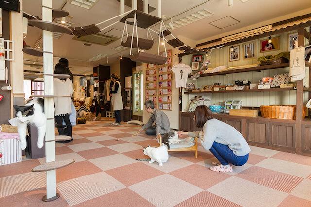 埼玉県の猫カフェ「猫家 大宮店」の店内イメージ