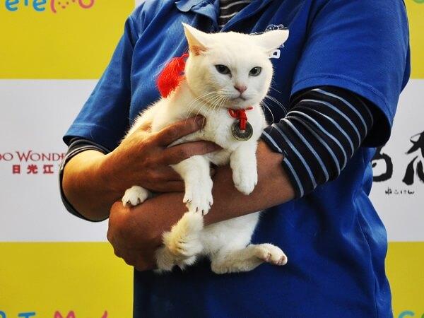 ドラマ&映画「猫侍」で主役を務めた猫・あなご