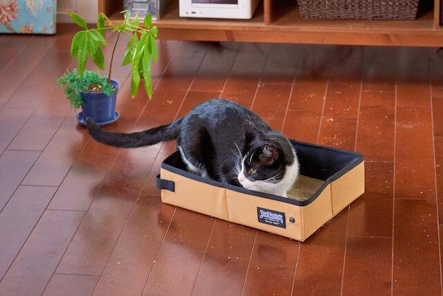 携帯用の猫トイレ「サンドボックス」を使用する猫