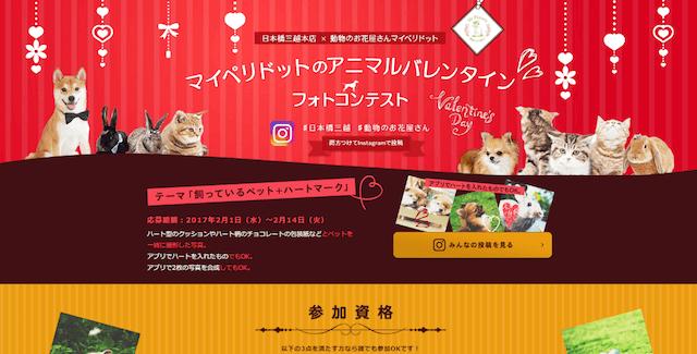 日本橋三越本店×動物のお花屋さんマイペリドットのコラボ企画「アニマルバレンタイン フォトコンテスト」
